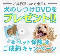 犬のしつけDVDプレゼント